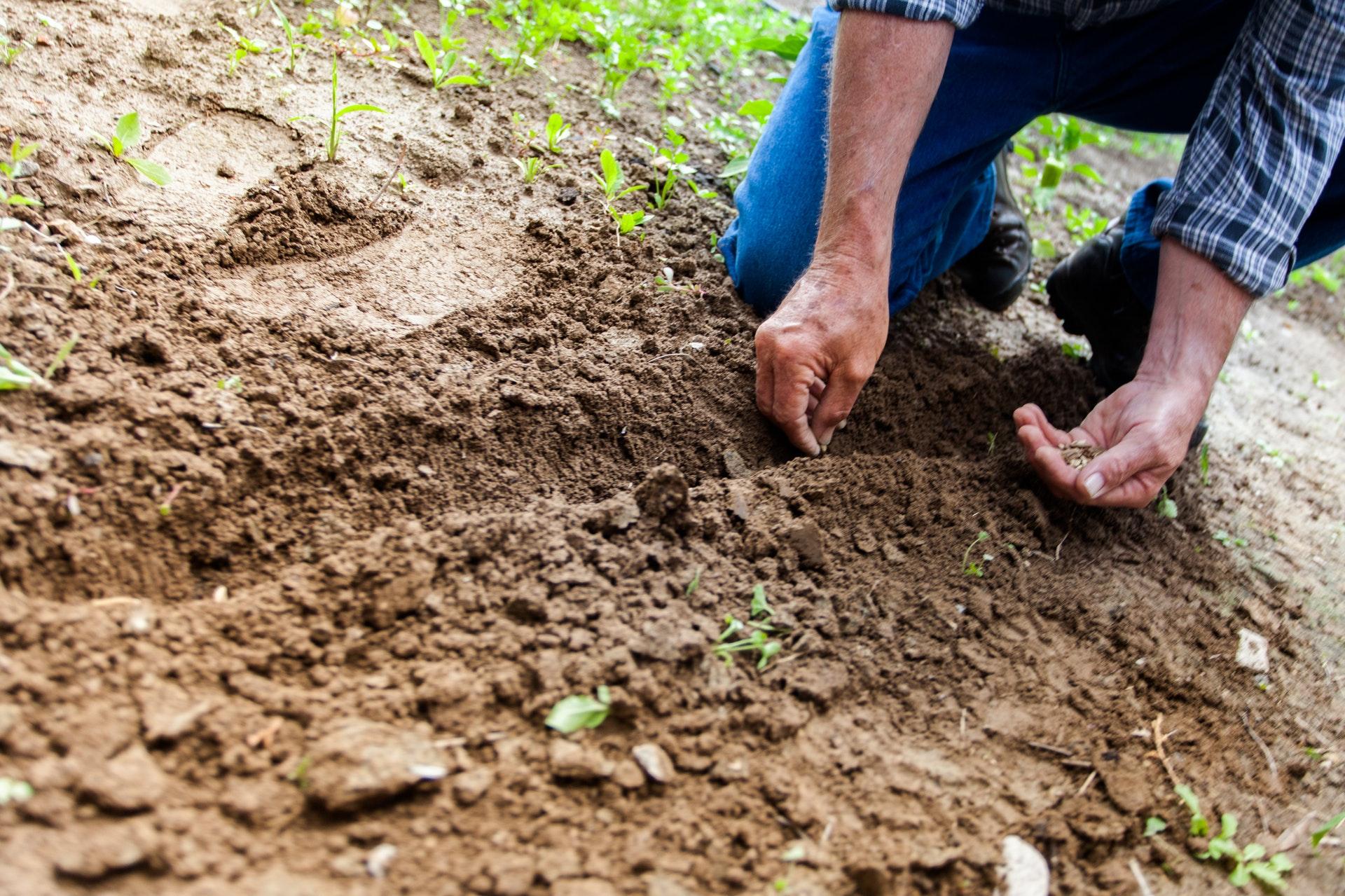 sadzenie i sianie