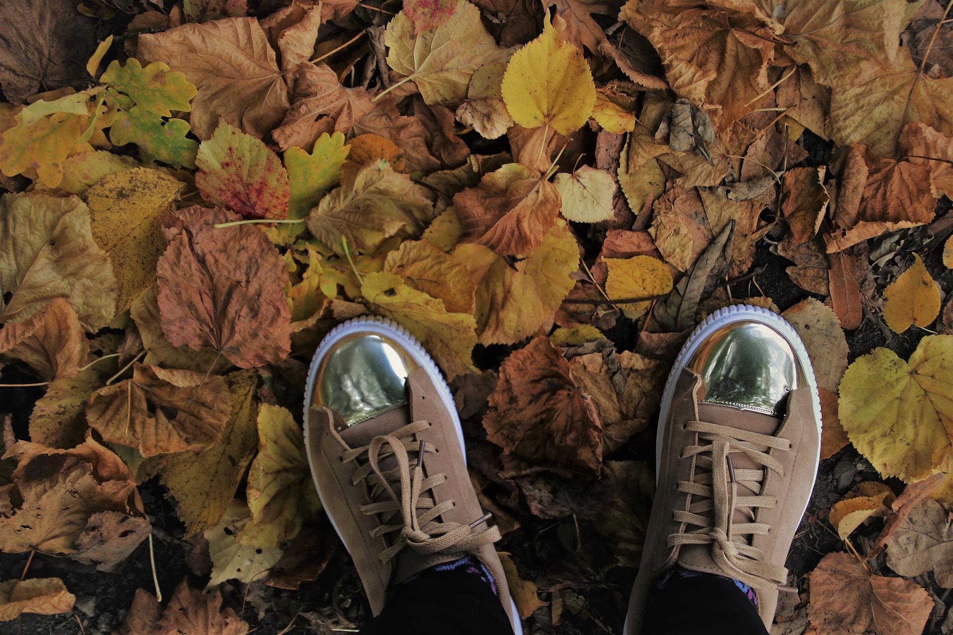 liście na ziemi