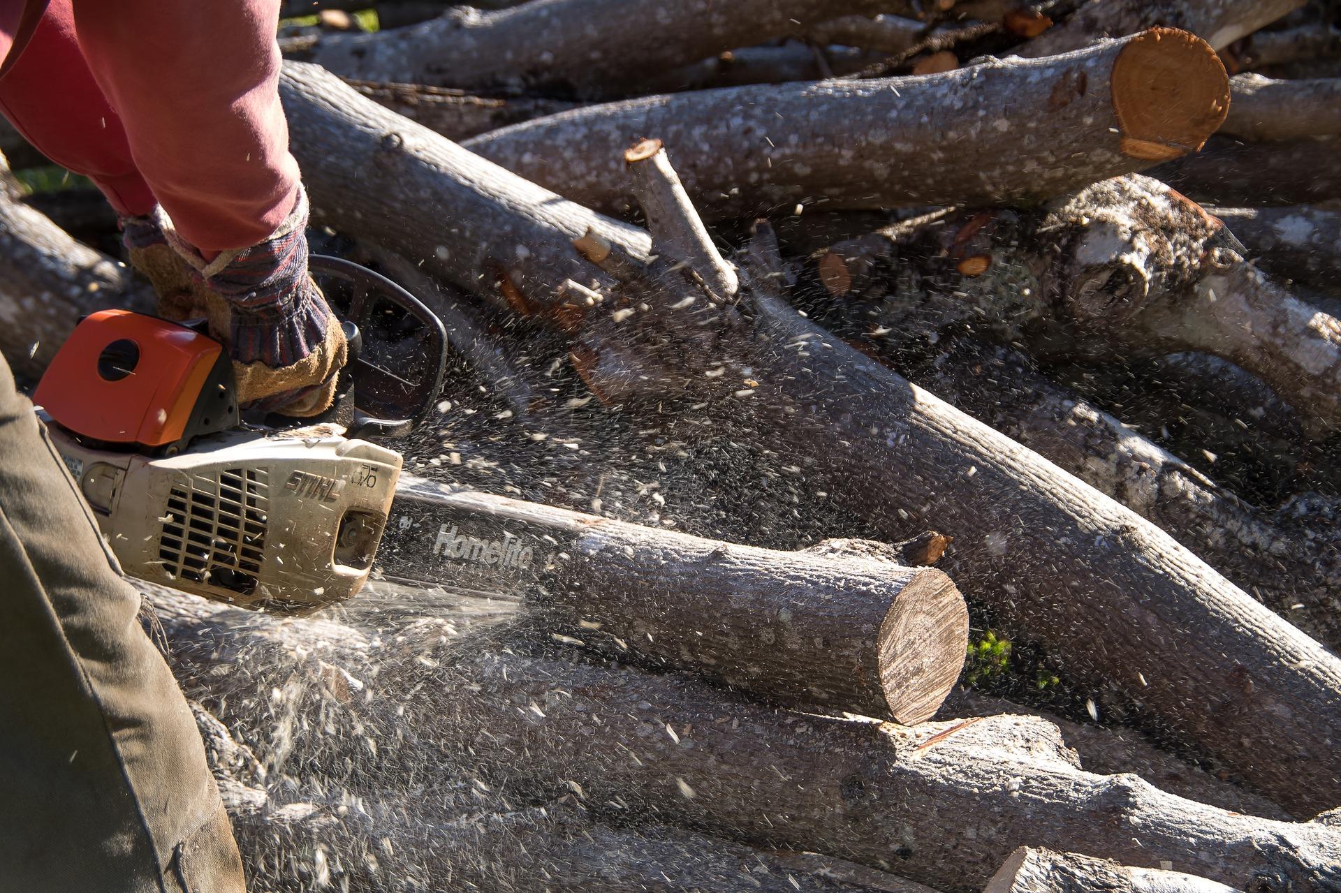 piła łańcuchowa i drewno